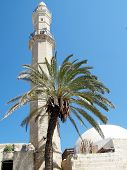 Jaffa Palm Tree In Front Of Mahmoudiya Mosque