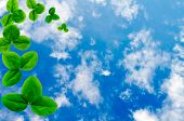 The Sky With A Shamrock