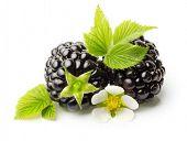 Blackberry isolated on white background