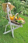 Vegetables On A Chair