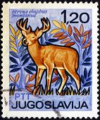 Postage Stamp Yugoslavia 1967 Red Deer