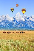 Bisons At Grand Teton National Park
