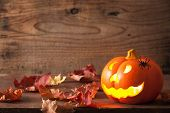 Halloween Jack O Lantern pumpkin spiders