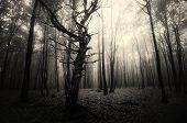 Halloween dark forest