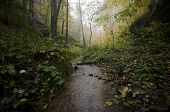 Rainforest with rain falling