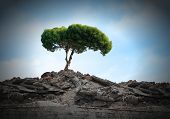 Conceptual image of green tree standing on ruins