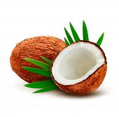 Coconut with leaves. Vector.