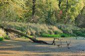 stock photo of flood  - Pond in a flood plain in autumn in a flood plain - JPG