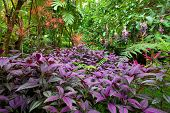 Colorful, Lush Tropical Rain Forest