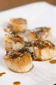 Scallop seafood appetizer