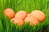 Chicken Eggs In The Green Grass Background