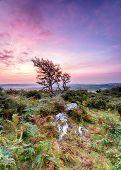 Rugged Cornish Countryside