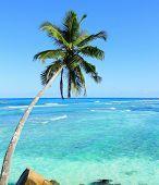 Coconut Paradise Coast