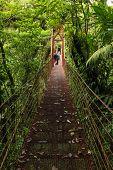Suspension bridge, Monteverde Reserve, Costa Rica