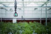 greenhouse vegetable growth, shanghai china.