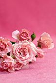 Beautiful Flower Pink  Roses