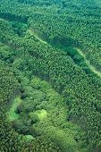 Big Island aerial shot - eucalyptus rain forest