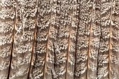 Feathers Background Pattern