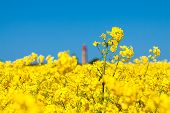 Canola And Lighthouse