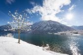 tree standing at lake and fresh snow winter mountain landscape