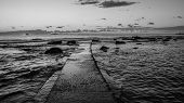 picture of leghorn  - Black and white sunset on the Tuscany sea in front of Leghorn