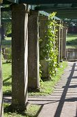 foto of pergola  - Pergola twined greens - JPG