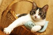Comfortable Cat In A Basket