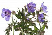 Decorative Flowers Close Up