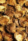 Oysters Mediterranean Sea Food Fresh On Ice Barcelona Market