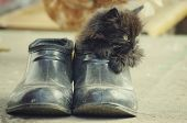 picture of scat  - little kitten playing - JPG