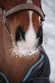 Close Up Of Bay Horse Nuzzle