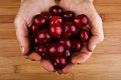 Hands with sweet cherries
