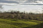 stock photo of apple orchard  - Rows of apple trees blooming on a countryside orchard during springtime - JPG