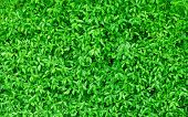 image of green wall  - Background Pattern Beautiful Horizontal Green Leaves Wall or Green Bush Background - JPG
