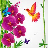 stock photo of jungle birds  - Floral design background - JPG