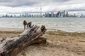 stock photo of tree snake  - This photo was shot from snake island which is opposite to Toronto city - JPG