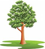 stock photo of elm  - Elm Tree  - JPG