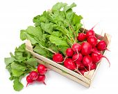 foto of crate  - Fresh harvested red radish in wooden crate - JPG