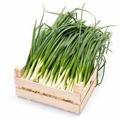 stock photo of crate  - Harvested fresh spring onions in wooden crate - JPG