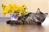 stock photo of yellow tabby  - domestic pet tabby cat and spring yellow flowers dandelions - JPG