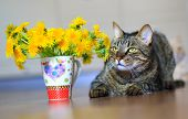 foto of yellow tabby  - domestic pet tabby cat and spring yellow flowers dandelions - JPG