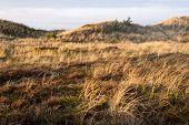 picture of vegetation  - Dune landscape in Skagen Denmark with vegetation and hills - JPG