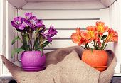 stock photo of crate  - Beautiful flowers in pots in wooden crate - JPG