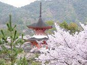 Pagoda In The Rain