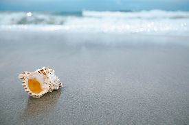 stock photo of under sea  - sea shell with sea wave - JPG