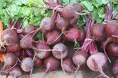 Beets In Bunches