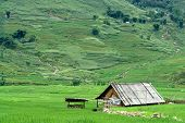 House In The Middle Of Rice Field