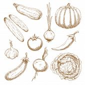 ������, ������: Fresh vegetables isolated sketches set