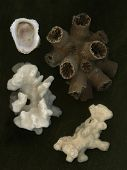 Corals And Shell