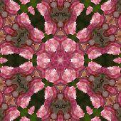 Mandala de rosa rosa